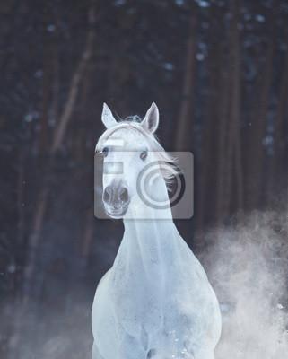 917c28ab3af39 Porträt von weißen pferd auf schnee auf wald hintergrund fototapete ...