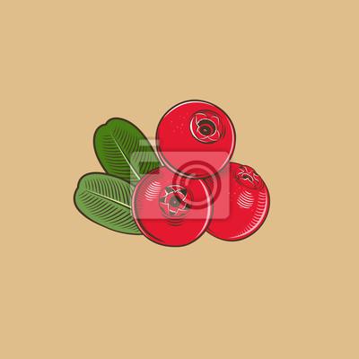 Preiselbeere im Weinleseart. Farbigen Vektor-Illustration