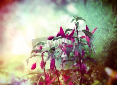 Fototapete Pretty Fuchsia Blumen auf Sommergarten Hintergrund close up getönten