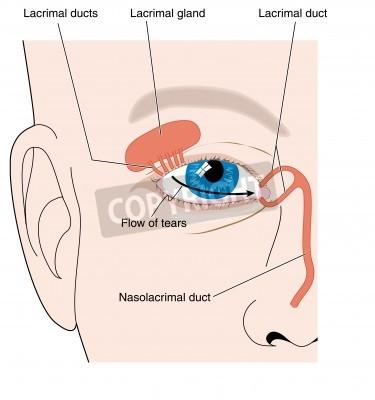 Produktion von tränen von der tränendrüse und tränenfluss über ...