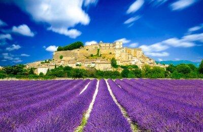 Fototapete Provence - Lavendelfelder in Frankreich
