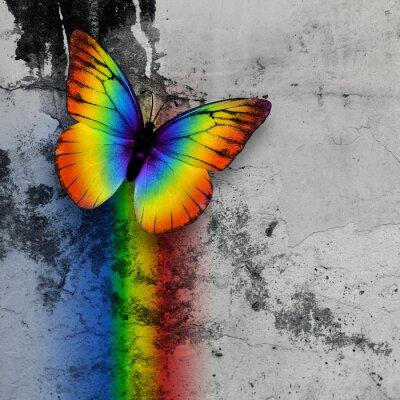 Fototapete rainbow butterfly