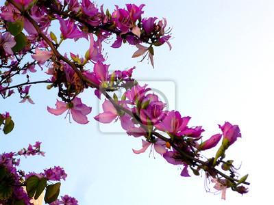 Ramas de los árboles con flores rosas und primavera en el jardín ...