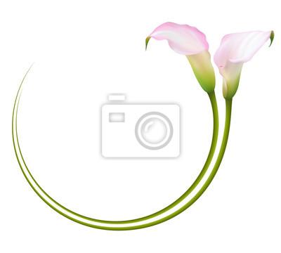 Realistische Rosa Calla Lily Frame Kreis Das Symbol Der