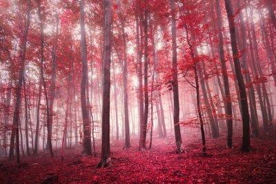 Fototapete Red gesättigten mystischen Herbst Jahreszeit Buchenwald Landschaft. Red Farbfilter Ton verwendet.