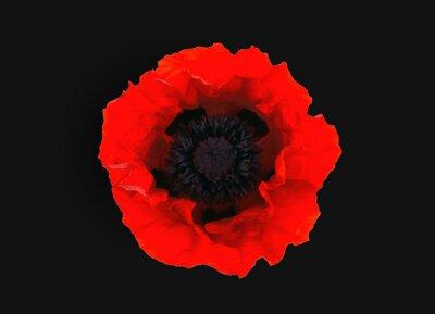 Fototapete  red poppy isolated on black  background