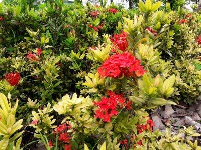 Red Spike Blume auf den grünen Blättern