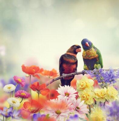 Fototapete Regenbogen-Papageien (Regenbogen-Lorikeet)