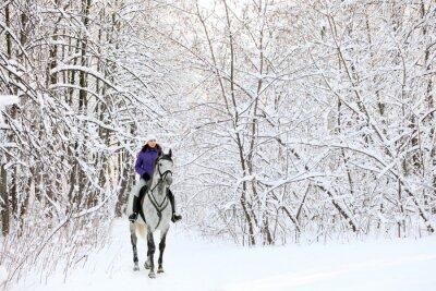 Fototapete Reiter auf dem Pferd am Rand des schneeWald im Winter überdacht