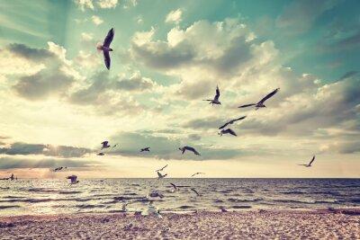 Fototapete Retro stilisierten Strand mit fliegenden Vögeln bei Sonnenuntergang