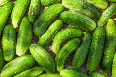 Fototapete Ripe cucumbers