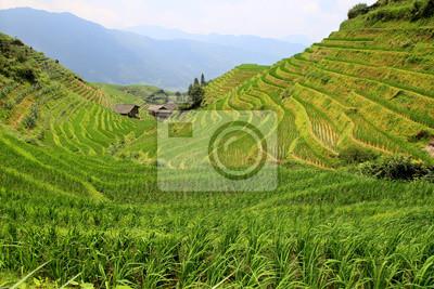 rizières à Pingan