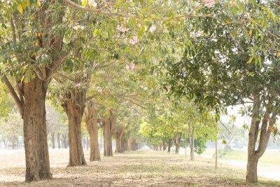 Fototapete road in garden