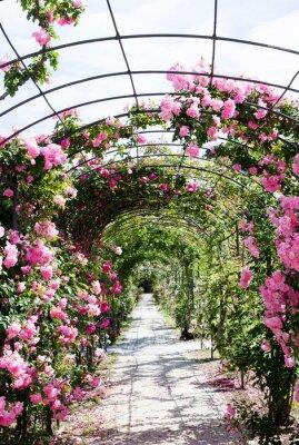 Fototapete romantic path into a luxuriant  rose garden