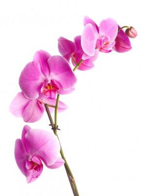 rosa bl ten orchidee auf einem wei en hintergrund fototapete fototapeten lensbaby sepal. Black Bedroom Furniture Sets. Home Design Ideas