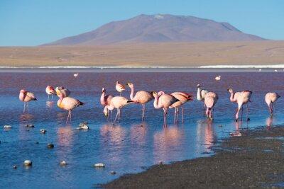 Fototapete Rosa Flamingos bei