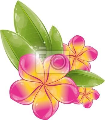 Rosa frangipani-blüte fototapete • fototapeten haitian, Frangipani ...