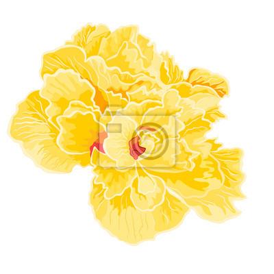 Rosa Hibiskus voller Blumen
