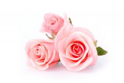 Fototapete rosa Rose Blume auf weißem Hintergrund