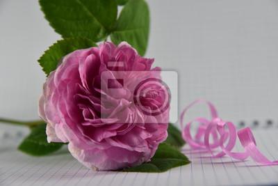 Rosa Rose Blume Blumenstrauss Rosen Natur Weiss Liebe