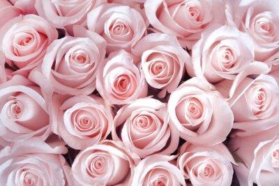 rosa rosen als hintergrund fototapete fototapeten bl tenbl tter sch ne seidig. Black Bedroom Furniture Sets. Home Design Ideas