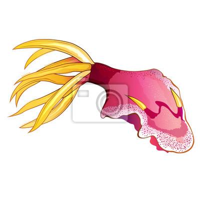 Rosa Tintenfisch-Abbildung