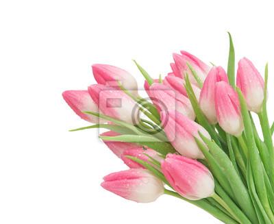 Rosa tulip blumen isoliert weißen hintergrund fototapete ...