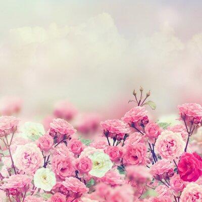 Fototapete Rose Blumen
