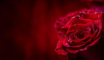 Fototapete Rose. Rote Rosen. Blumenstrauß aus roten Rosen. Valentinstag, Hochzeitstag Hintergrund. Rose Blütenblätter und Herzen Valentine Geschenk-Boxen. Valentinsgrüße und Hochzeitsgrenze. Wassertropfen auf Ro