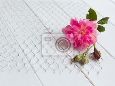 Rose und rose knospen auf hühnerdraht auf weißem holz hintergrund ...