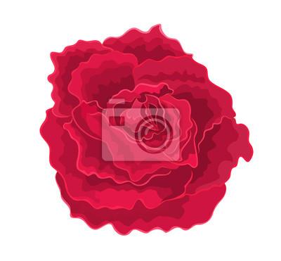 Rosen rot einfachen