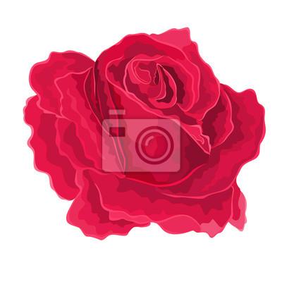 Rosen-Rot,-simple