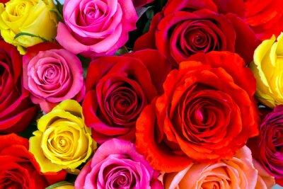 Fototapete Roses background