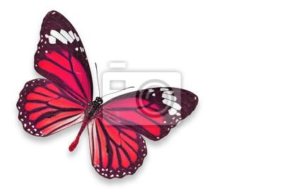 Rot Schmetterling