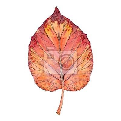 rote Blatt, Aquarell