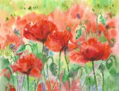 Fototapete Rote Mohnblumen Blumen Hintergrund, Aquarell.
