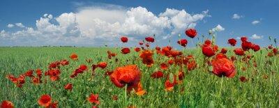 Fototapete rote Mohnblumen und Himmel mit Wolken