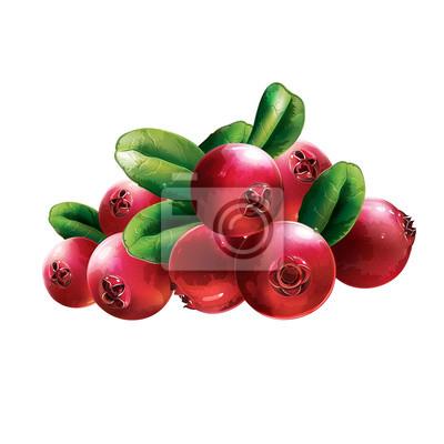 Rote Preiselbeeren Mit Blättern