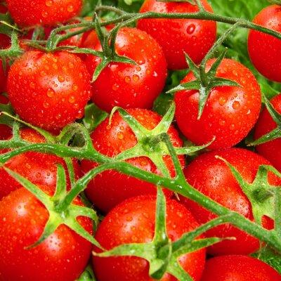 Fototapete rote Tomaten