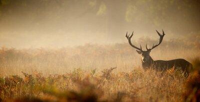 Fototapete Rothirsch Silhouette im Nebel