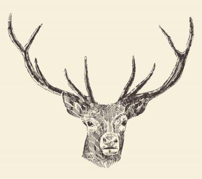 Fototapete Rotwild-Kopf-Weinlese-Illustration, Hand gezeichnet, Vektor-