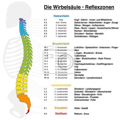 Rückgrat-reflexzonen-diagramm mit genauer beschreibung der ...