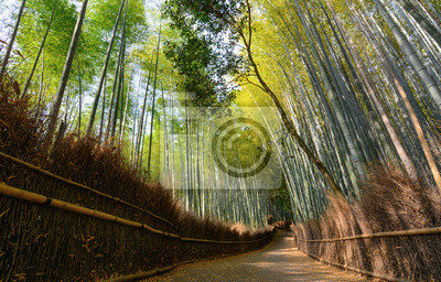 Ruhiger Weg Im Arashiyama Bambushain In Kyoto Japan Fototapete