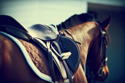 Fototapete Saddle with stirrups