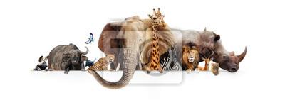 Fototapete Safari-Tiere, die über weißer Fahne hängen