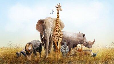 Fototapete Safari Tiere in Afrika Composite