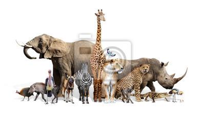 Fototapete Safari Wildlife Group on White