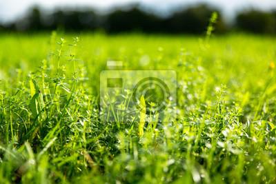Saftige grüne Wiese