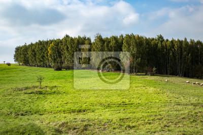 Saftiger Birkenwald im Frühling