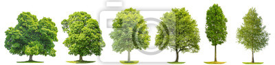 Fototapete Sammlung Bäume Ahorn Eiche Birke Kastanie Isolierte Natur Objekte